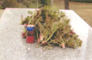 山菜タラの芽